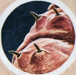 Die Würmer beim Welpen wie werden gezeigt
